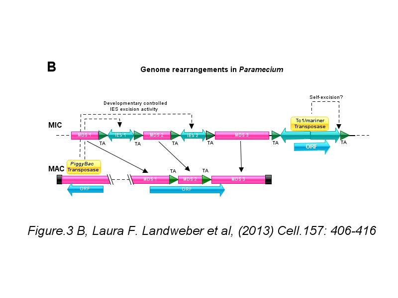 Ibs illustrator for biological sequences previous next ccuart Image collections